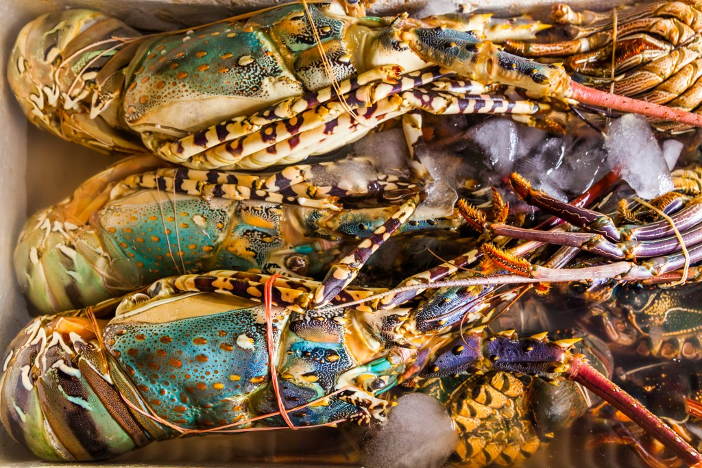 Fresh lobster at the seafood market. Bali
